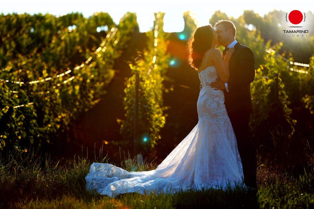 Image for 'How To Plan The Perfect Vineyard Wedding' blog2